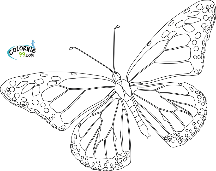 2234 Ide Coloring Pages Butterfly Life Cycle 35 Best