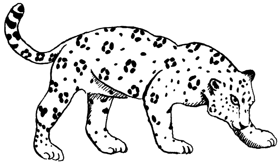 coloring pages baby jaguar - photo#21