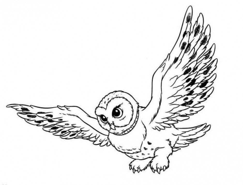 Snowy Owl Coloring Pages Coloring