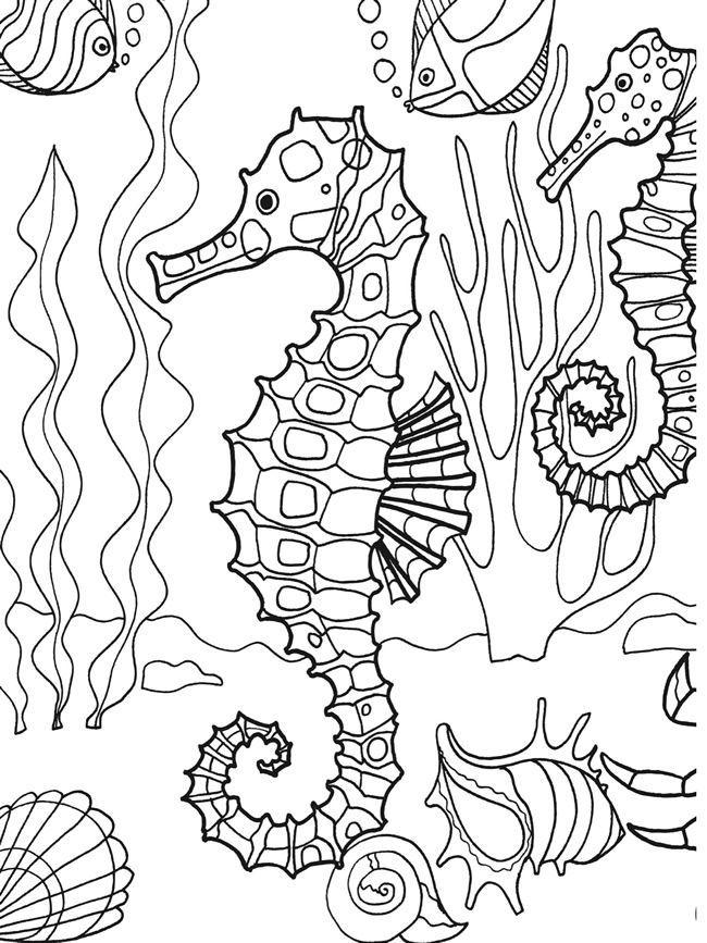 Pin By Cynthia Johnson On Ocean Life