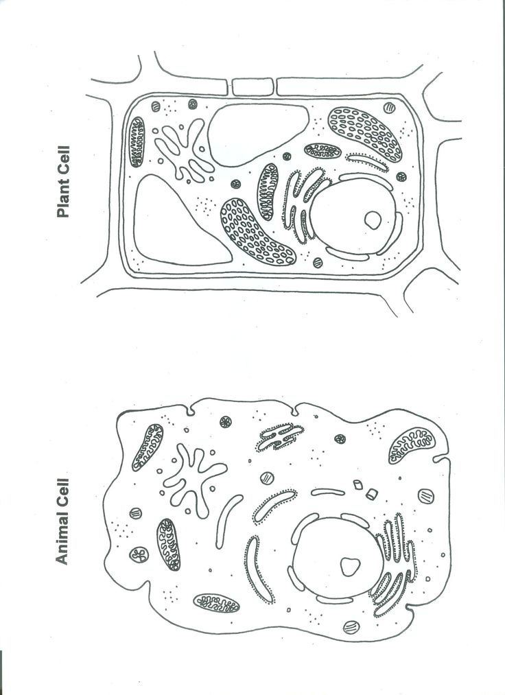 Worksheet Plant And Animal Cell Worksheet animal cell coloring page az pages pin by stephanie may on teaching