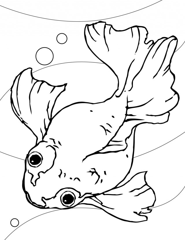 fish preschool coloring pages - photo#33