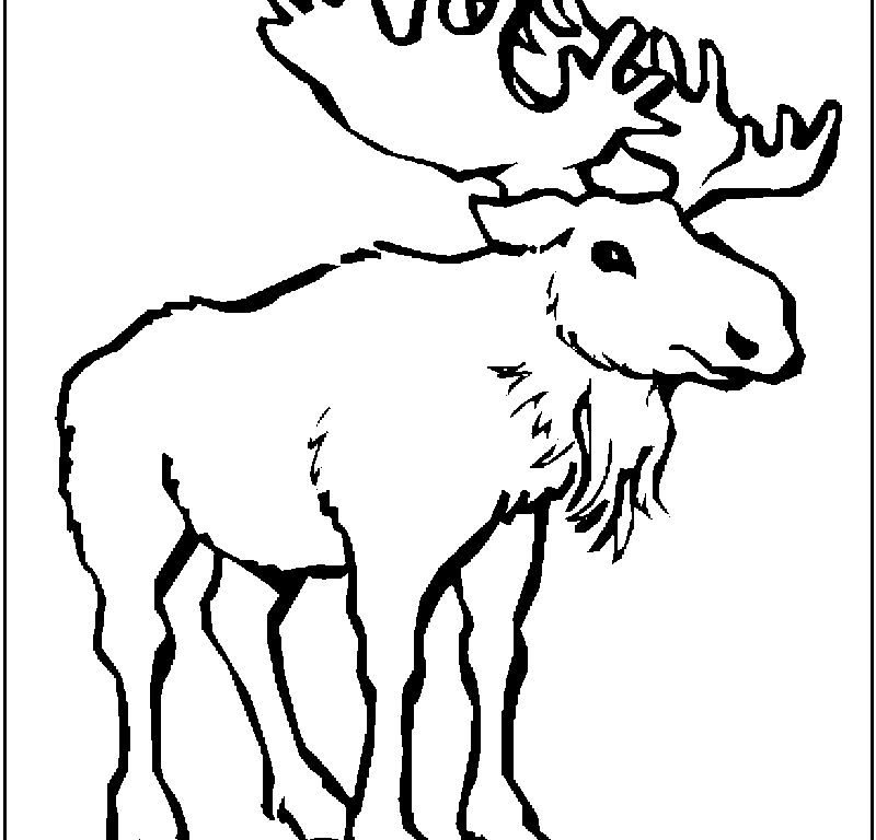 Realistic Moose Coloring Pages - Kids Colouring Pages