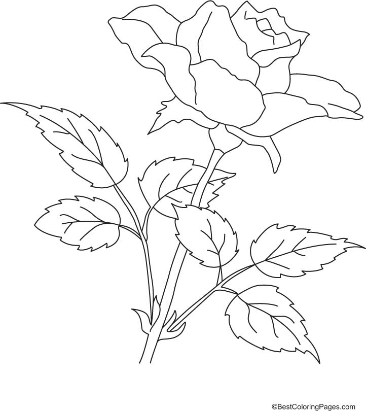 Coloring Pages Rose Coloring