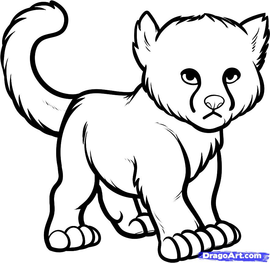 Cheetah Drawings Images AZ Coloring Pages