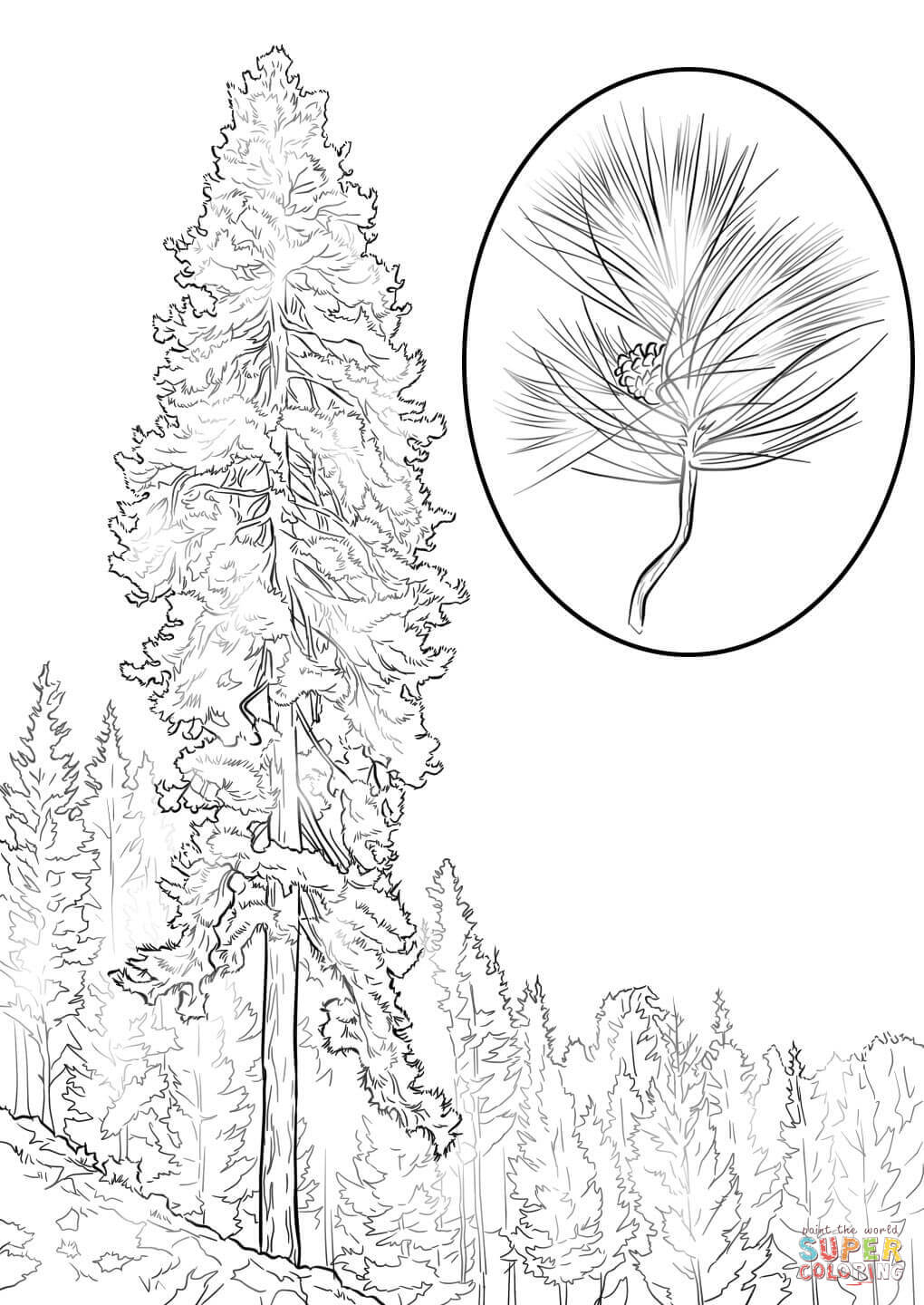 Coloring Pages Pine Tree Coloring Home