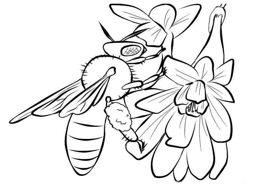 Insects For Kids Coloring Pages