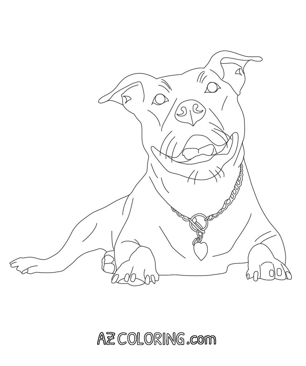 Pitbull Coloring Page Coloring Home