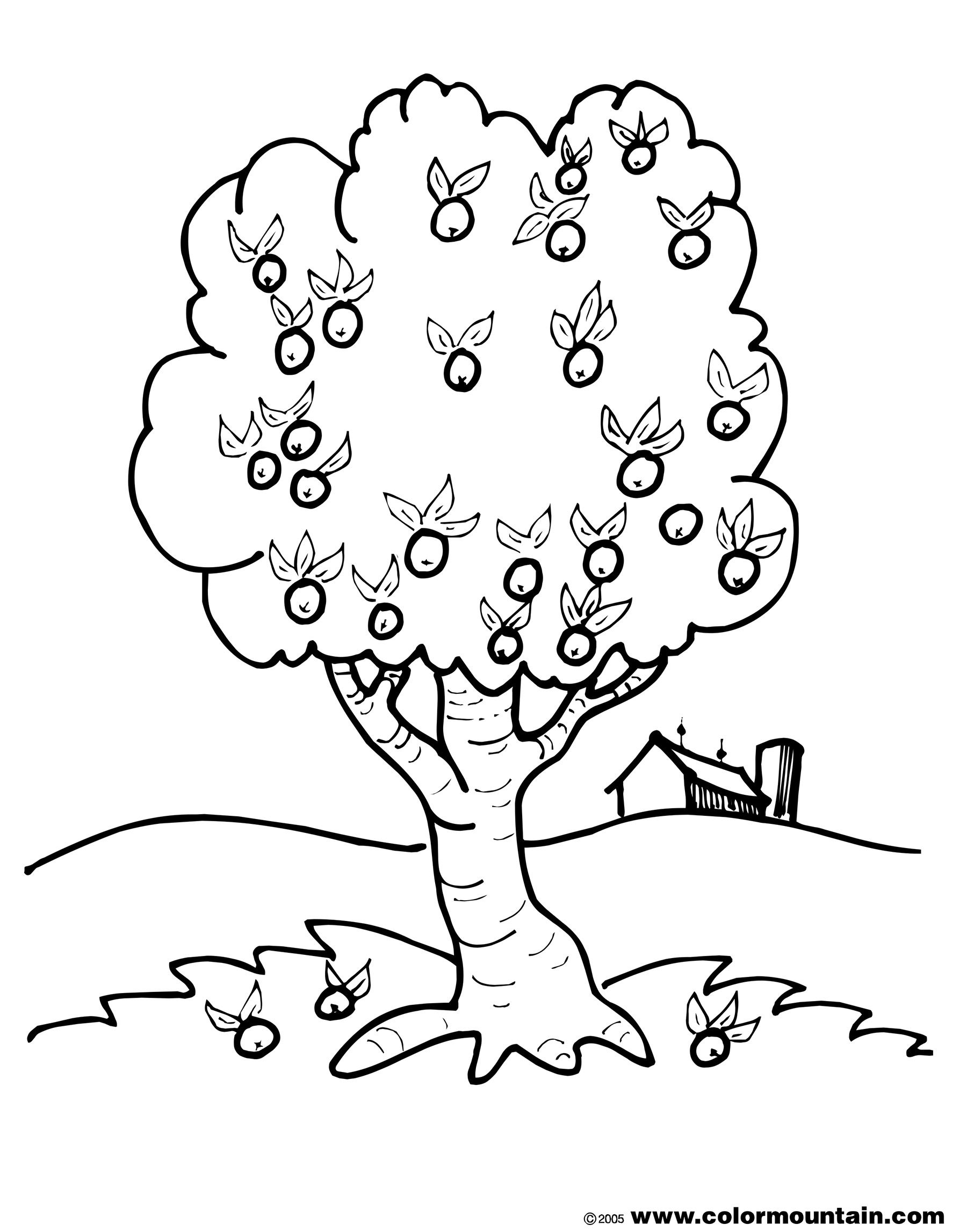 apple tree color page create a printout or activity coloring home