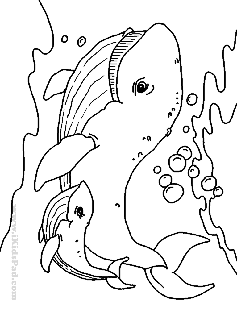 Sea animals coloring page – Coloring Page |Aquatic Animals Coloring Pages