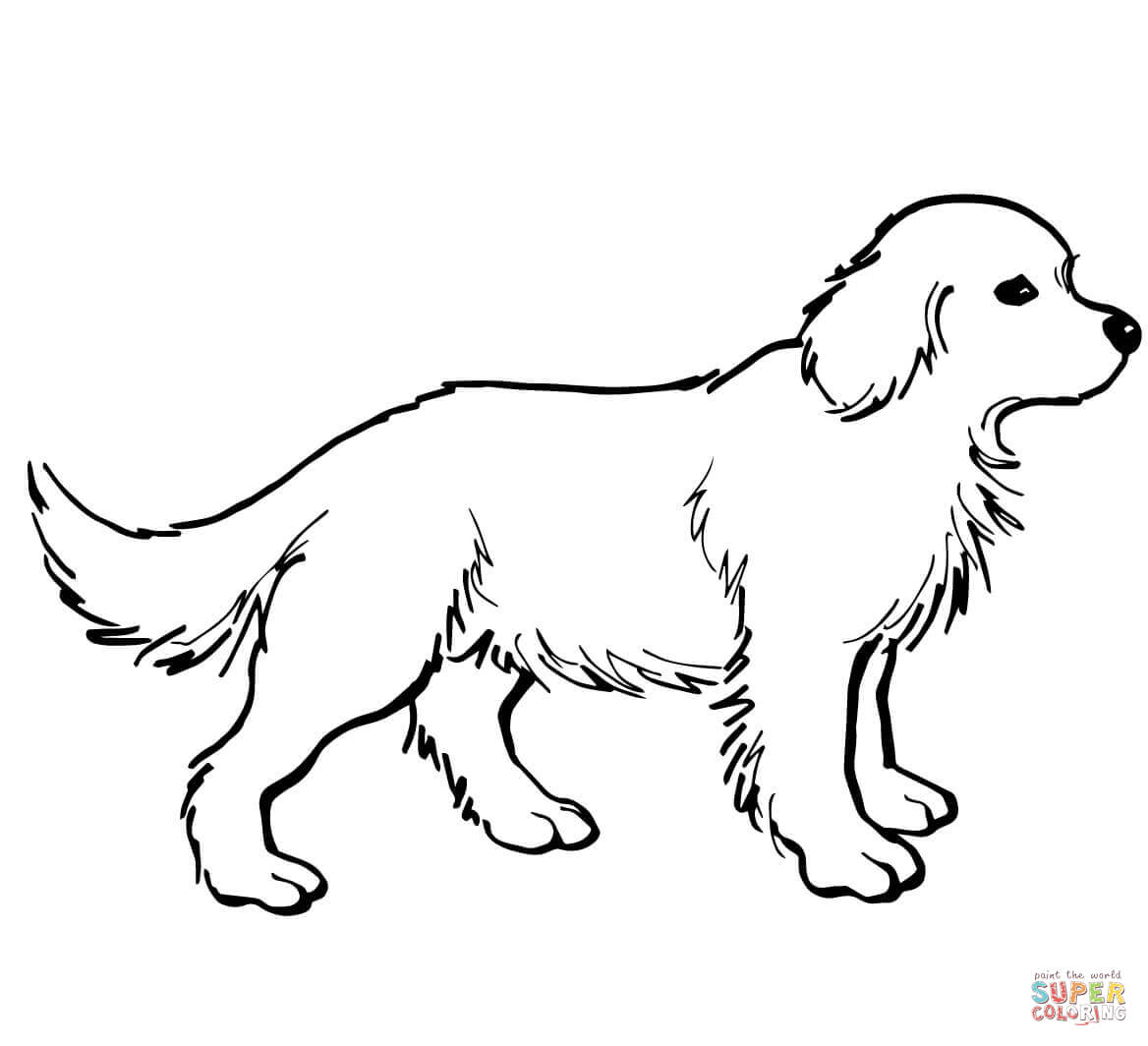 Free coloring pages golden retriever - Golden Retriever Puppy Coloring Page Free Printable Coloring Pages Coloring