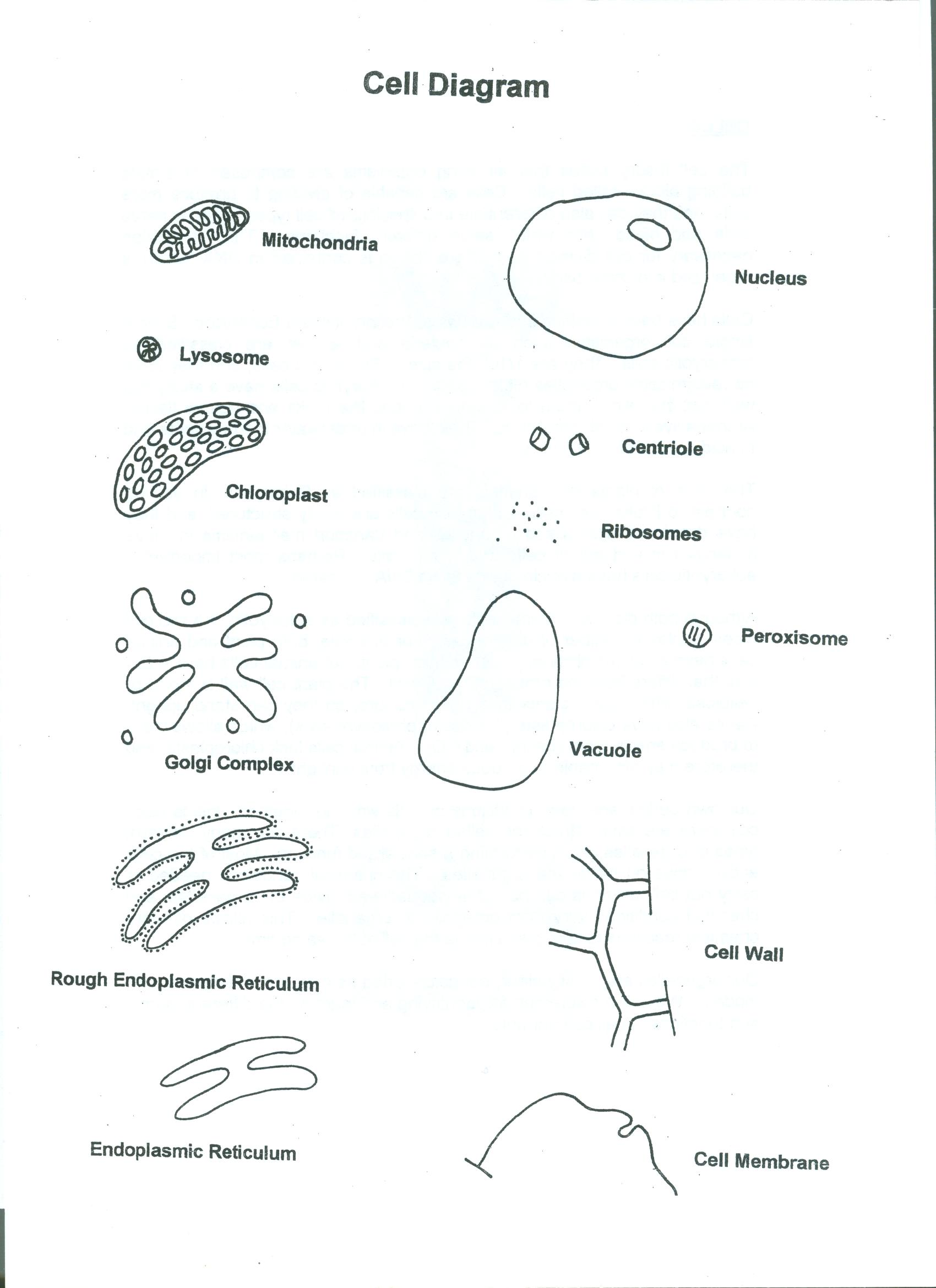 Animal Cell Vs Plant Cell Venn Diagram diagram collections