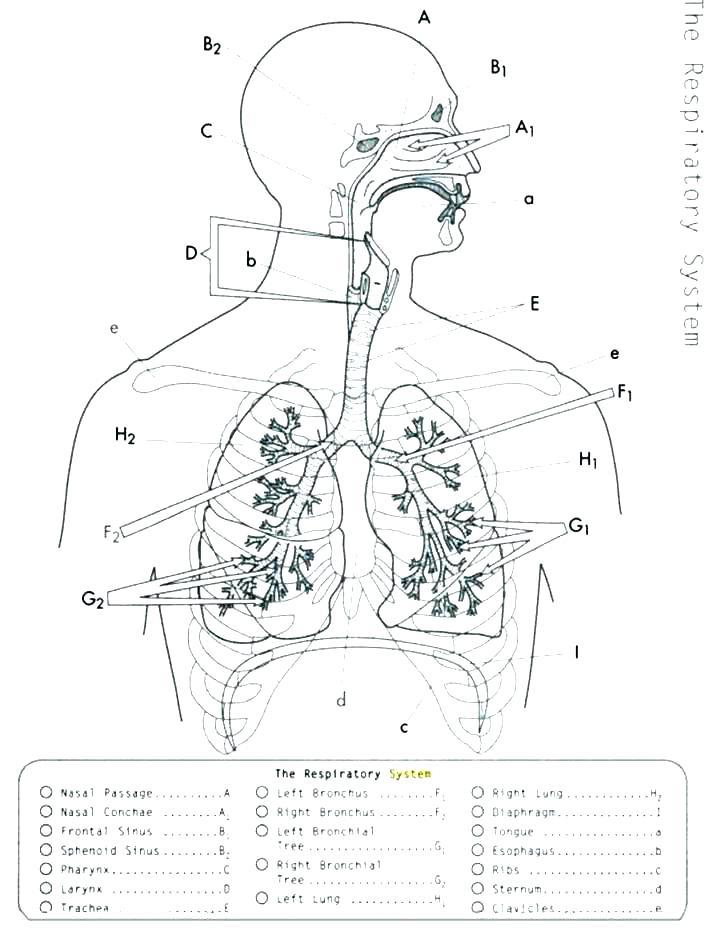 Beautiful Anatomy And Physiology Coloring Book AnyOneForAnyaTeam -  Coloring Home