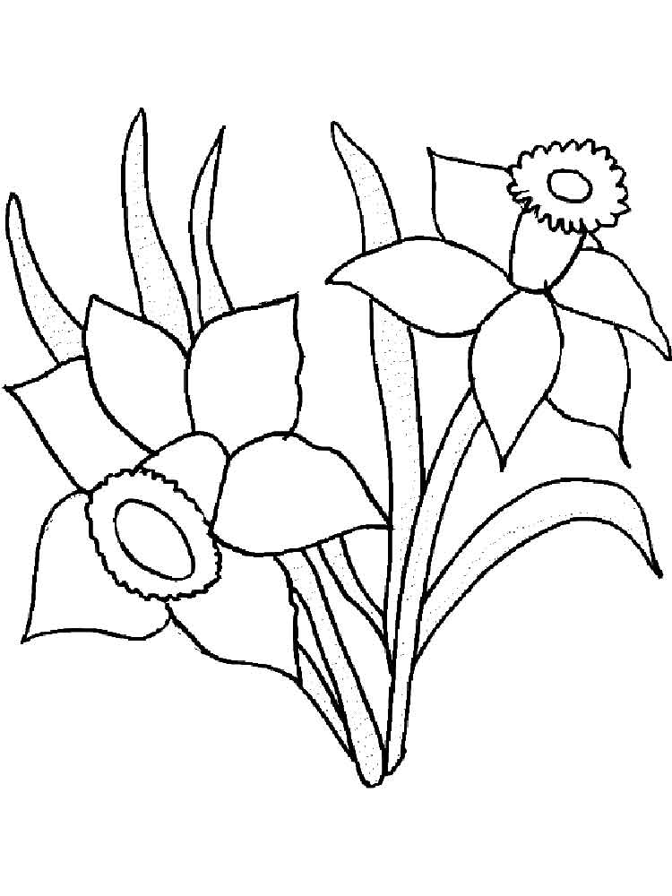 coloring pages daffodils. daffodil or narcissus spring flowers ...