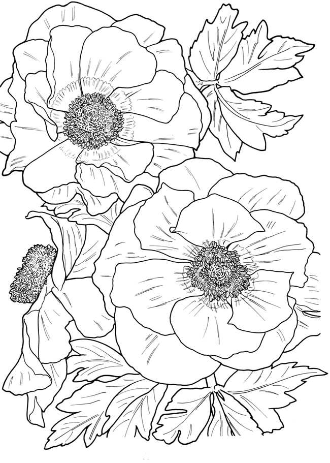 Flower Coloring Pages For Adults Www Robertdee Org