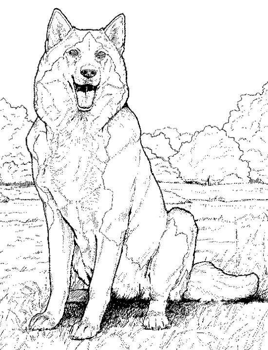 Husky Realistic Dog Coloring Pages 1576 Realistic Dog Coloring Coloring Home
