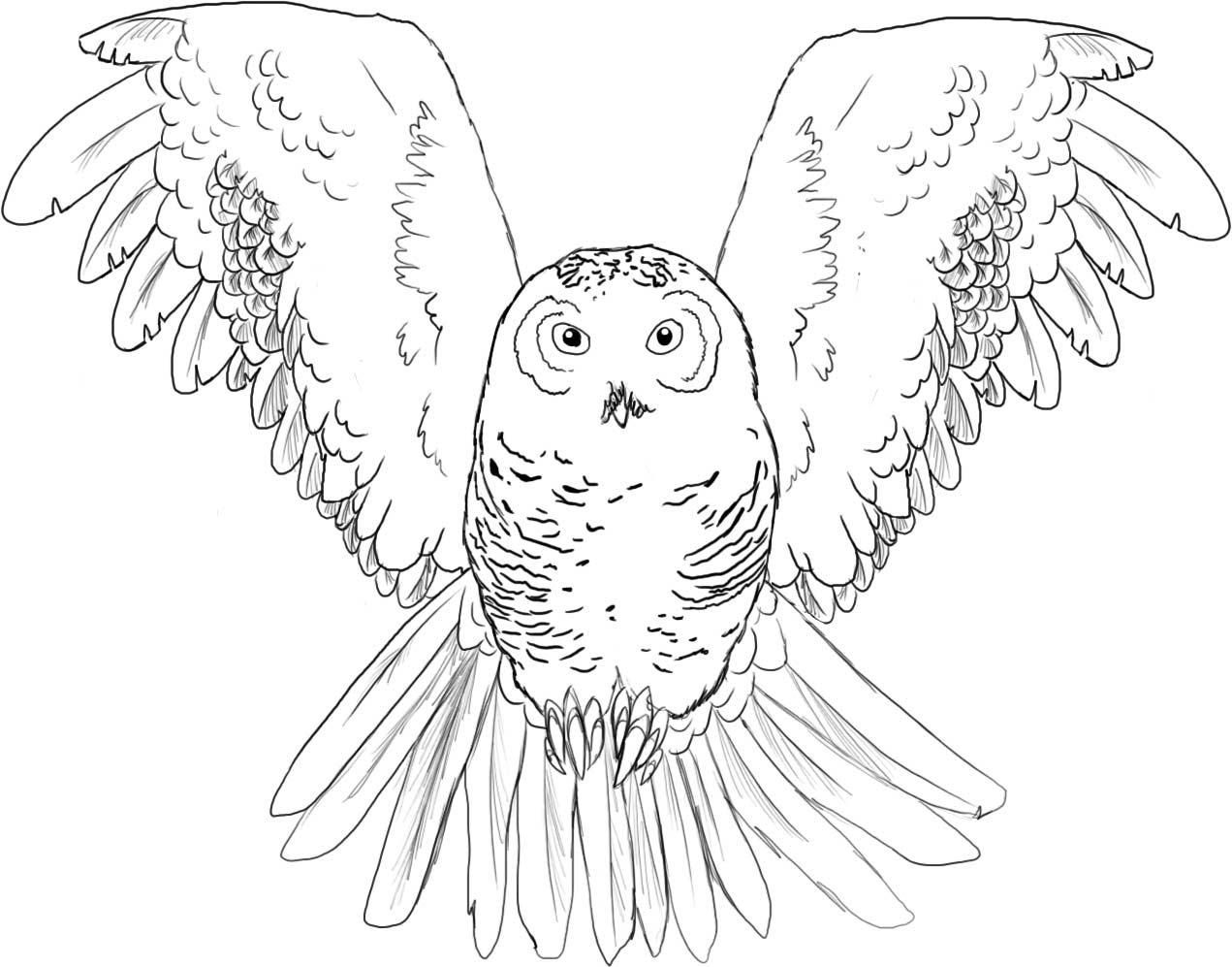 baby owl coloring pages for kids and for adults coloring home