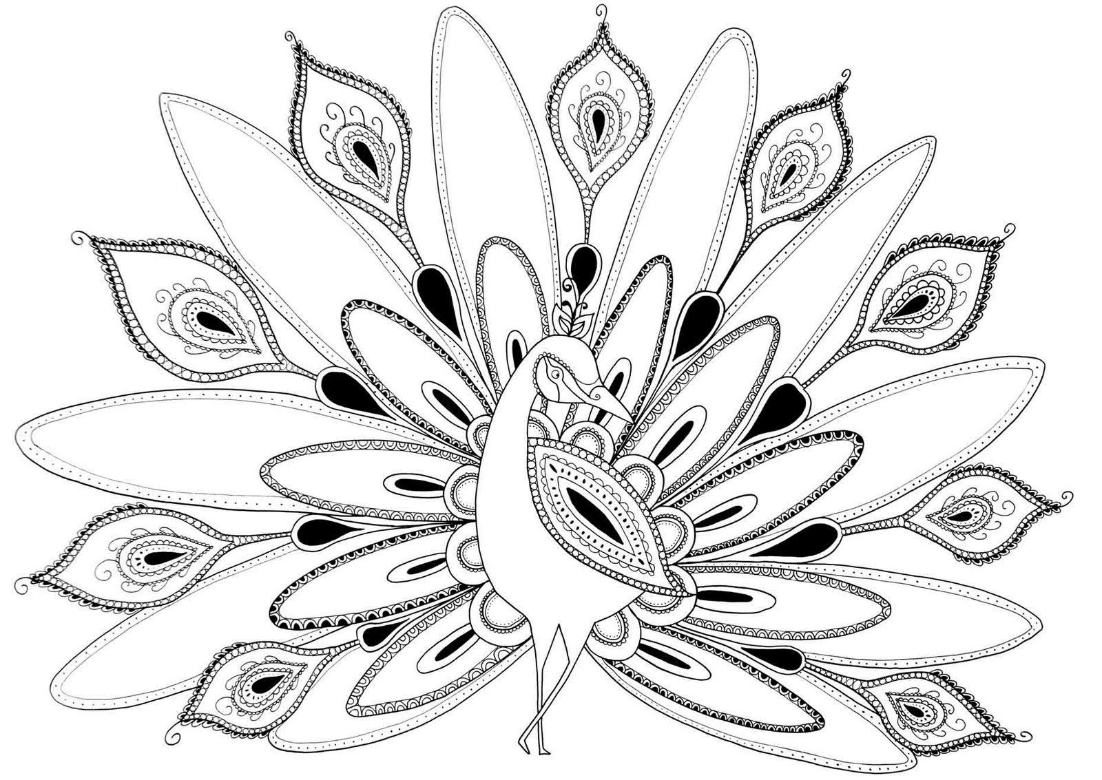 Cool Coloring Pages For Adults Peacock Az Coloring Pages Coloring Pages Peacock