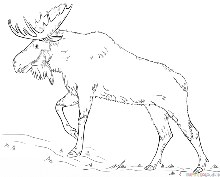 moose outline drawing