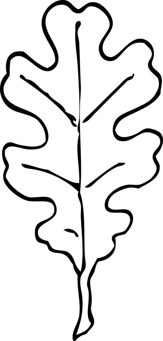 White Oak Leaf Outline | patterns | Pinterest | Oak Leaves, White ...