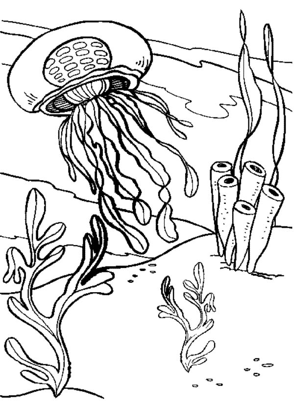 coloring pages jellyfish - photo #22