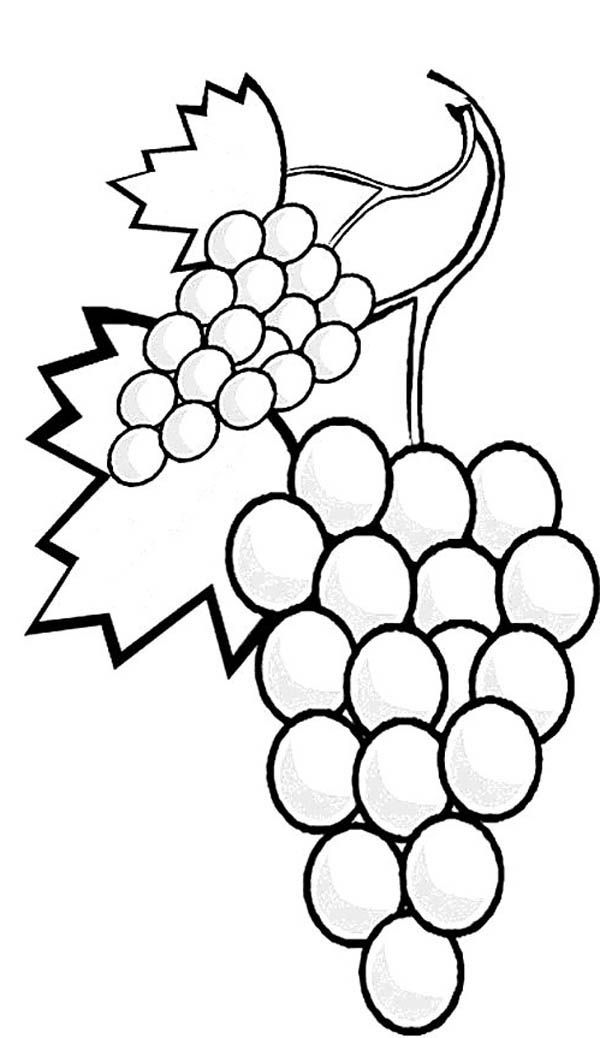 Grapes Coloring Page Coloring Home Grapes Coloring Pages