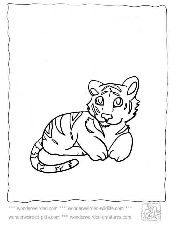 Baby Tiger Coloring Pages Coloring Home