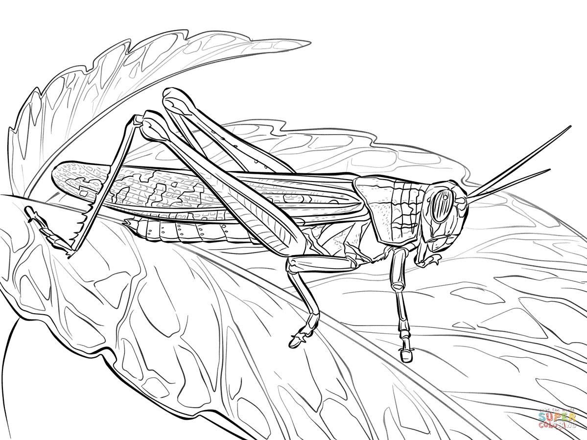 Rocky Mountain Locust Coloring Page | Free Printable Coloring Pages ...