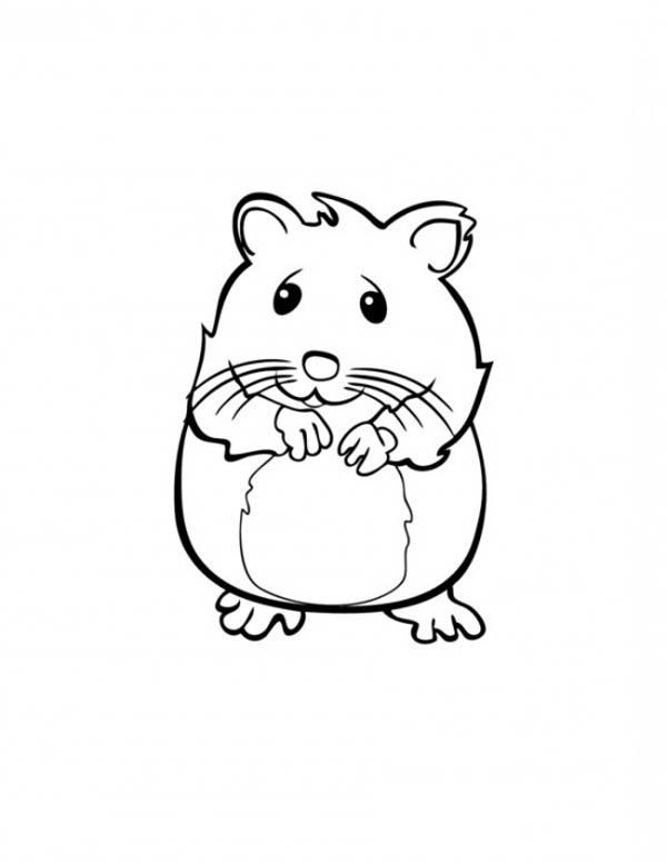 A Cute Sandy The Hamster Coloring Pages Cute Baby Guinea Pigs