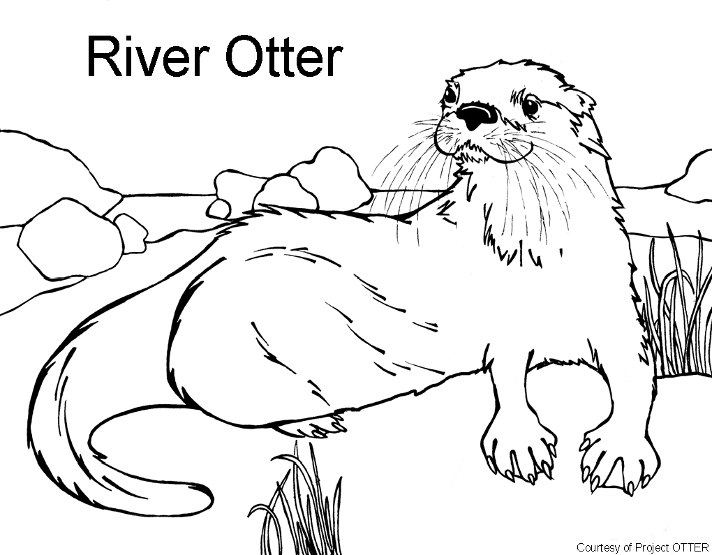 O Is For Otter Coloring Page