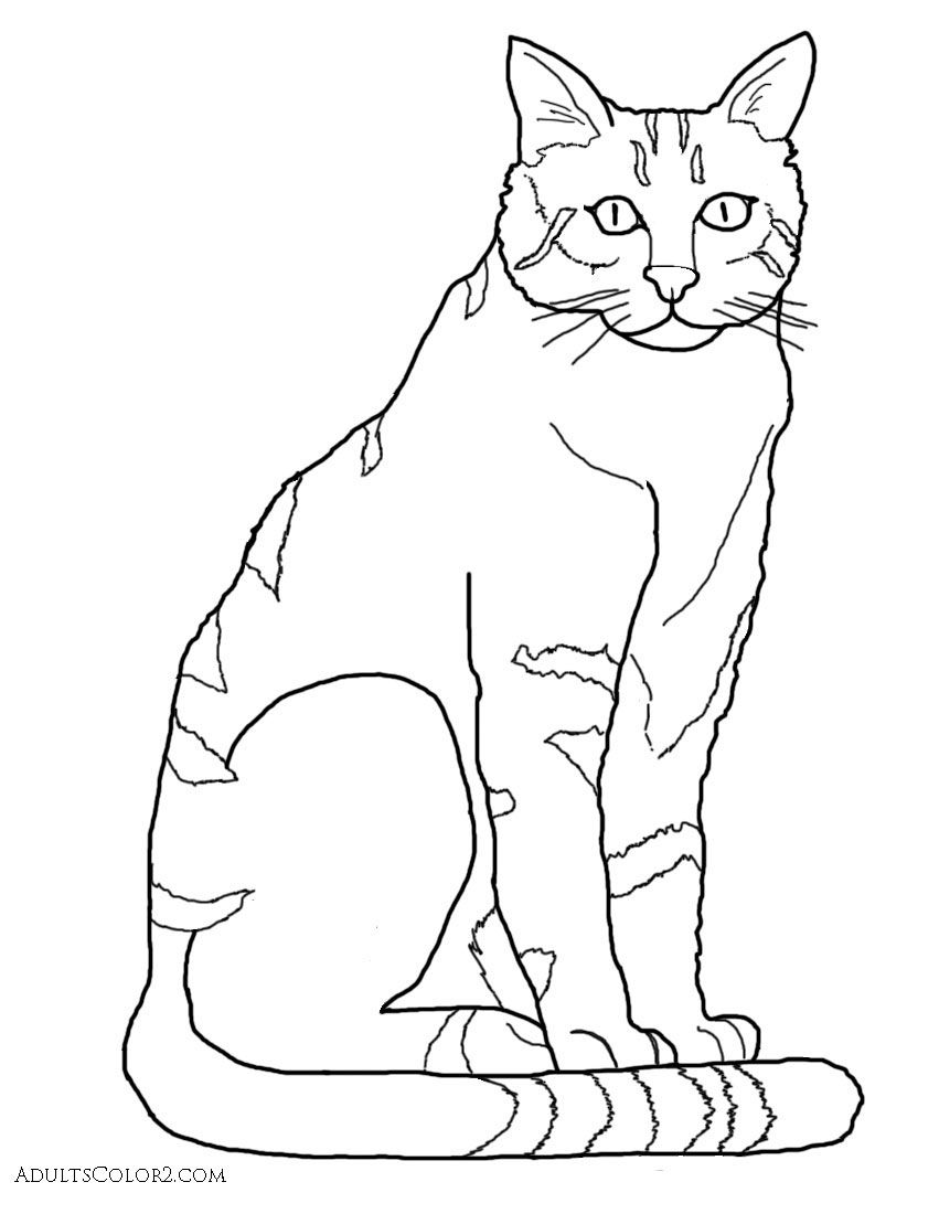 Clip Art Wildcat Coloring Page caracal coloring page az pages best photos of wildcat for adults logo