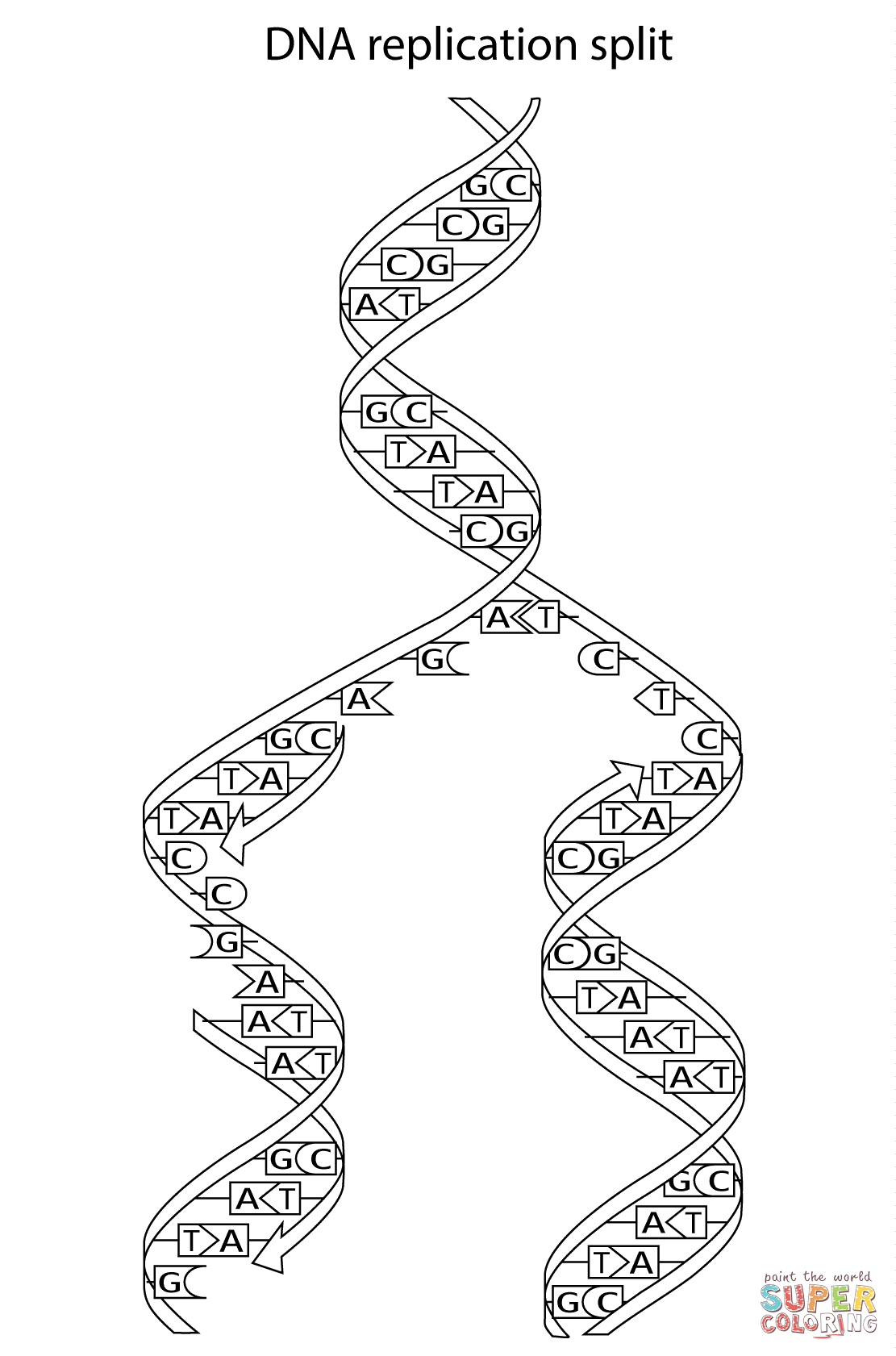 genetics coloring pages - photo#7