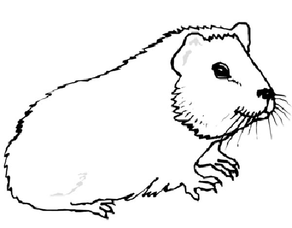 Guinea Pig Coloring Pages Coloring Home Guinea Pig Coloring