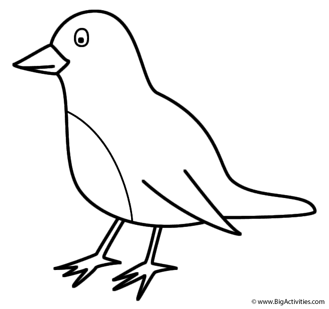 Robin - Coloring Page (Birds)