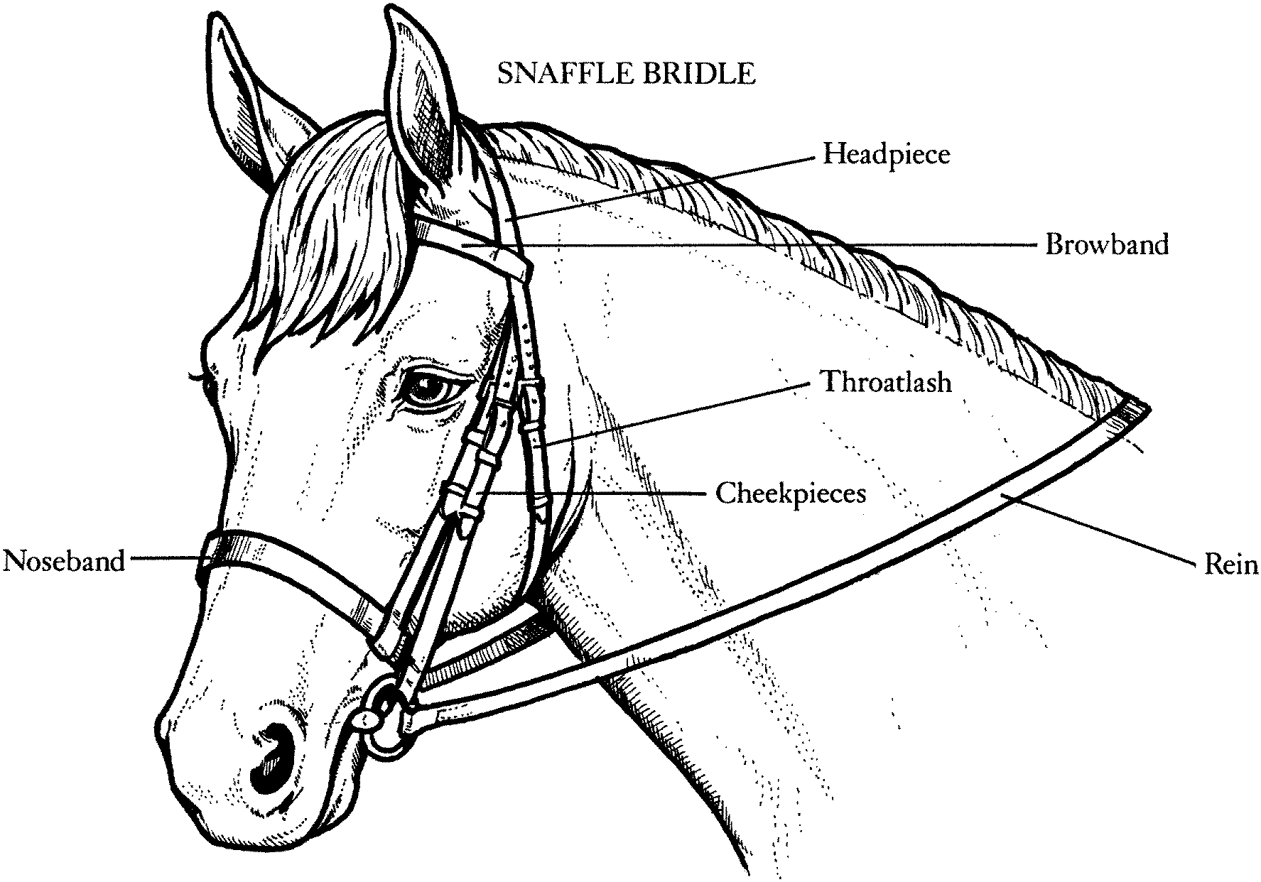 seabiscuit coloring pages