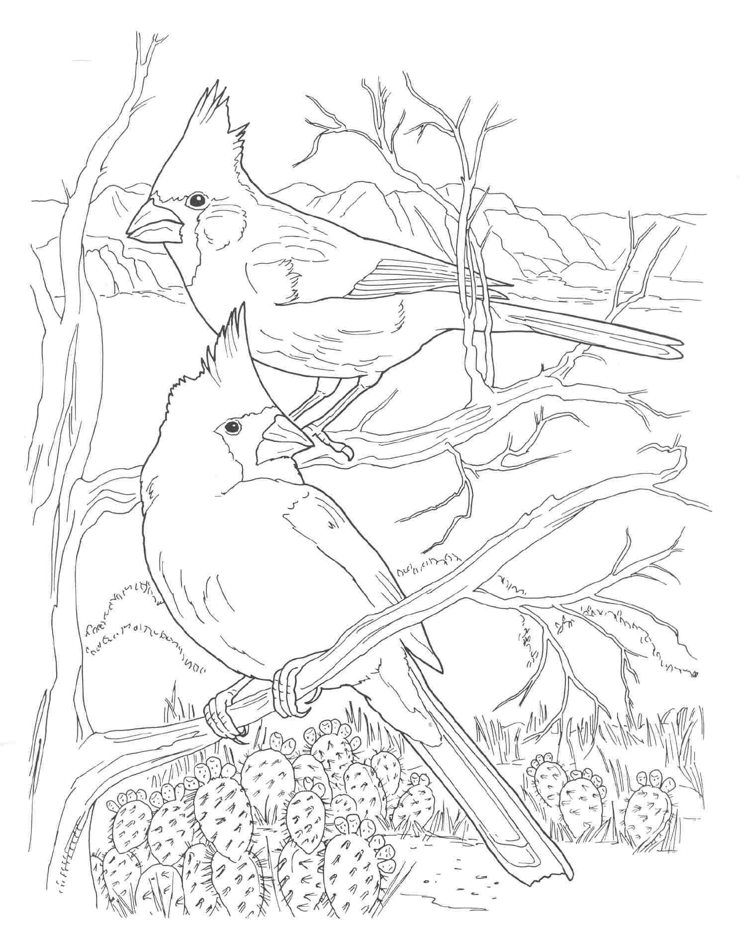 az cardinals coloring pages - photo #31