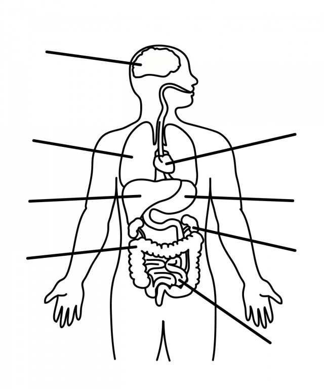 human anatomy coloring page