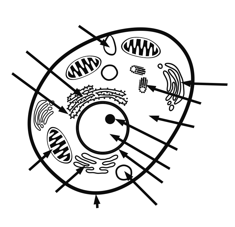 Plant And Animal Cell Coloring Page Coloring Home