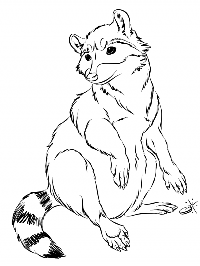 Baby Raccoon Coloring Pages