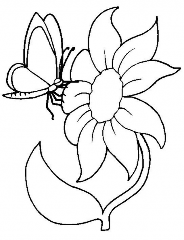 Coloring Page Sunflower And Butterfly KidsColoringPics 249078