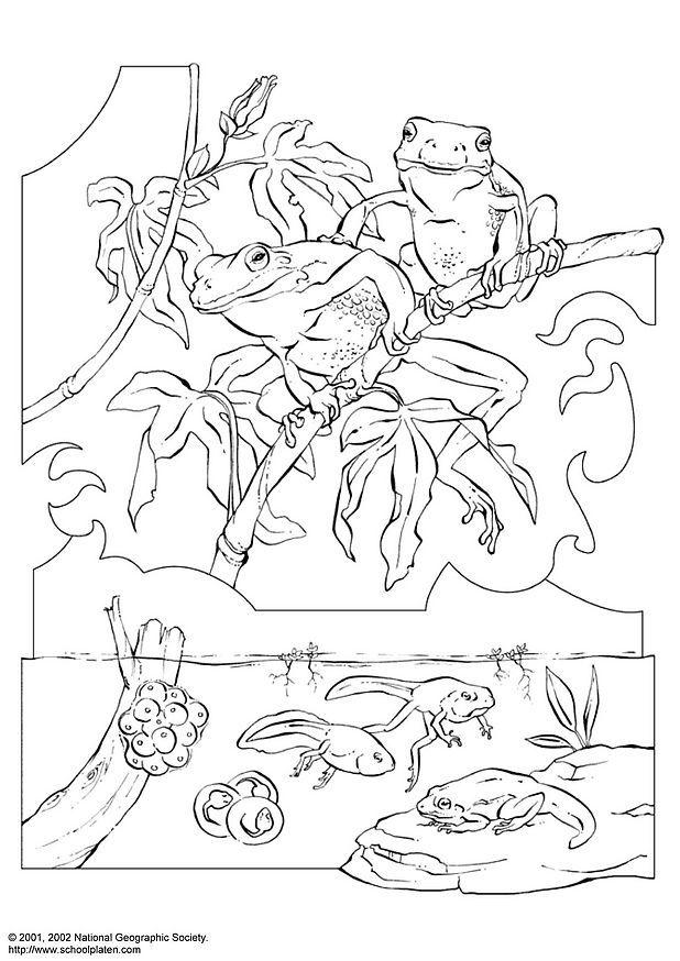 tadpole coloring pages - photo #29