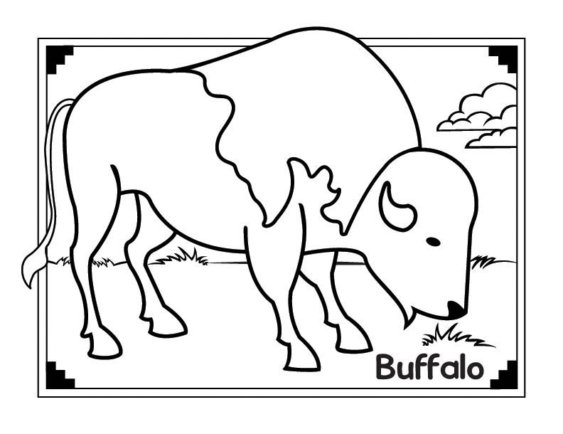buffalo coloring pages - photo#30