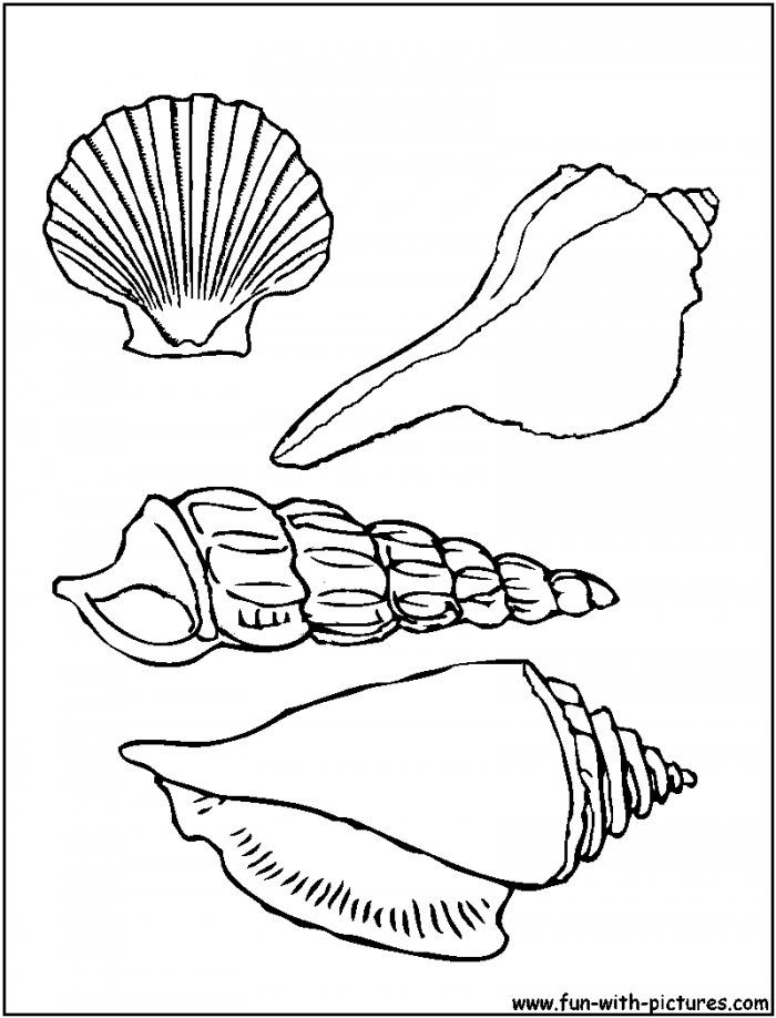 Sea Shells Coloring Pages | 99coloring.com
