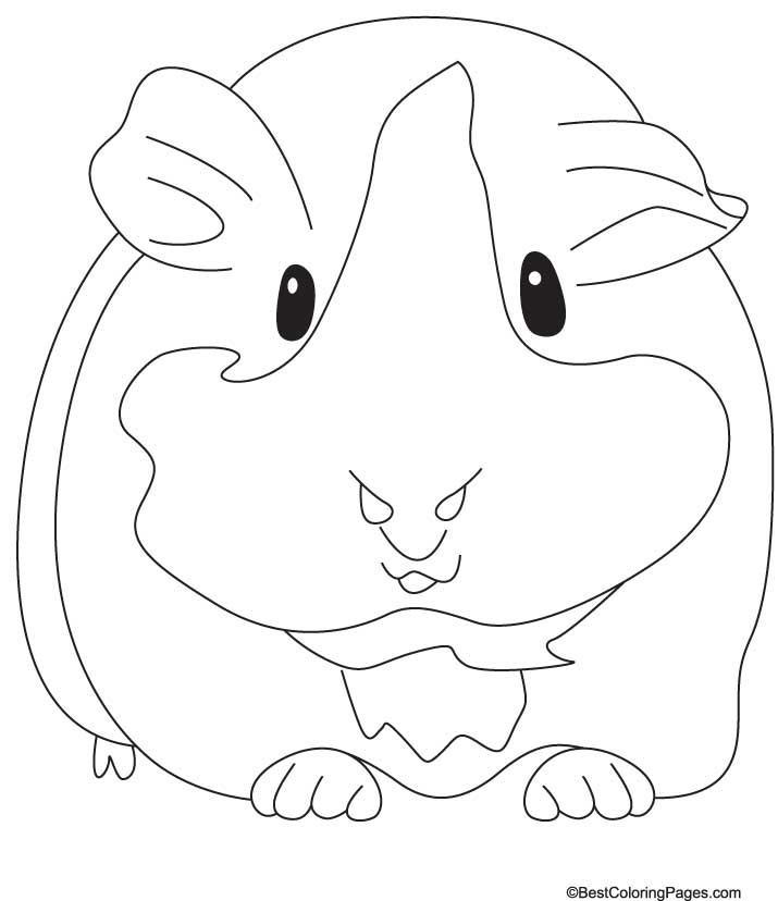 guinea pig free coloring pages | Guinea Pig Coloring Pages - Kidsuki