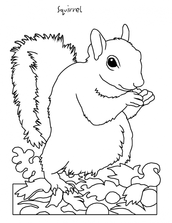 Squirrel Coloring Page : Printable Coloring Book Sheet Online for