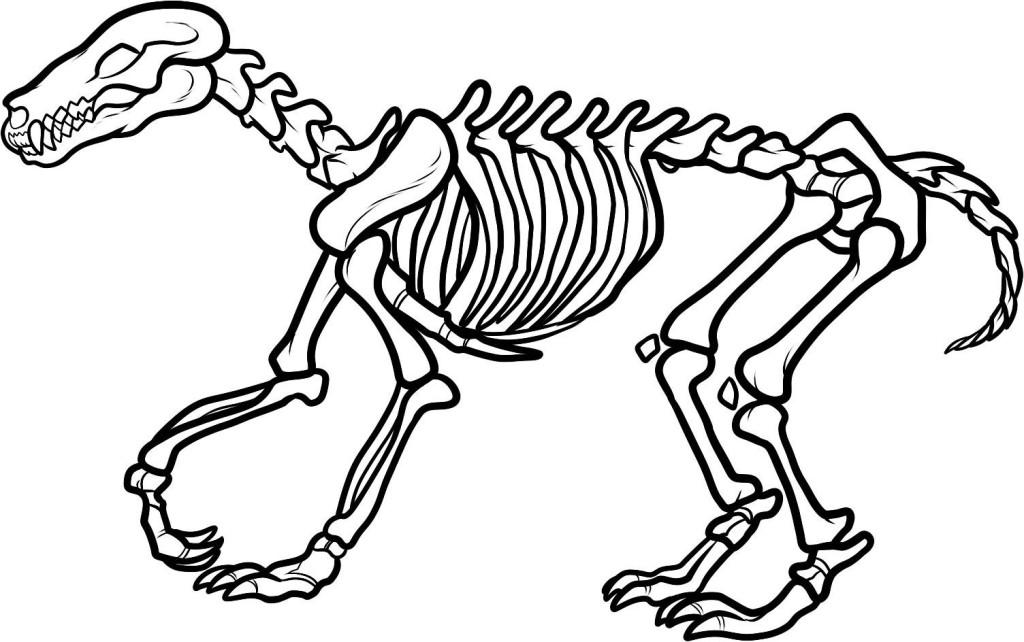 T rex Skeleton Coloring Page AZ Pages