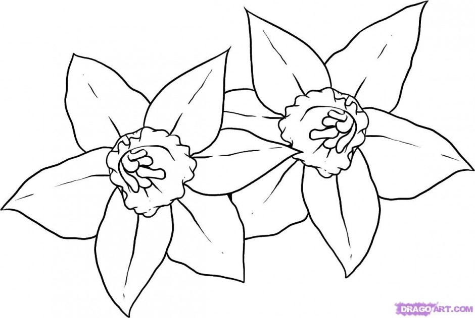 Line Drawing Daffodil : Daffodil coloring pages az