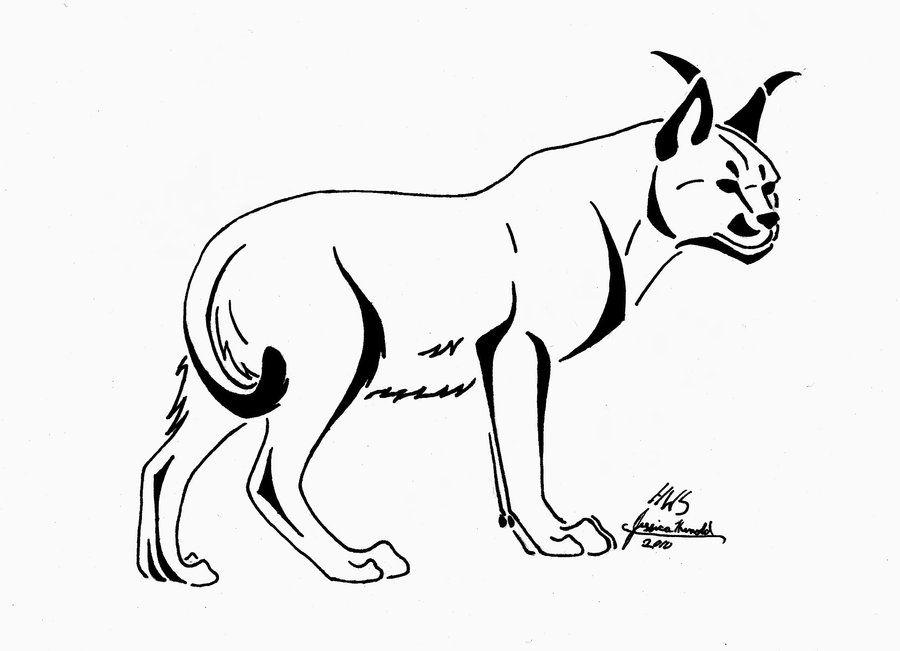 coloring pages caracal : Printable Coloring Sheet ~ Anbu Coloring
