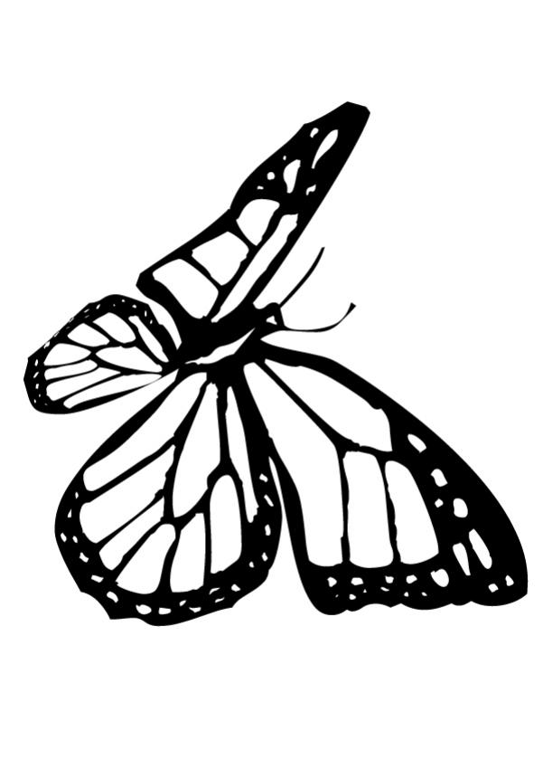printable monarch butterfly coloring page mycrws