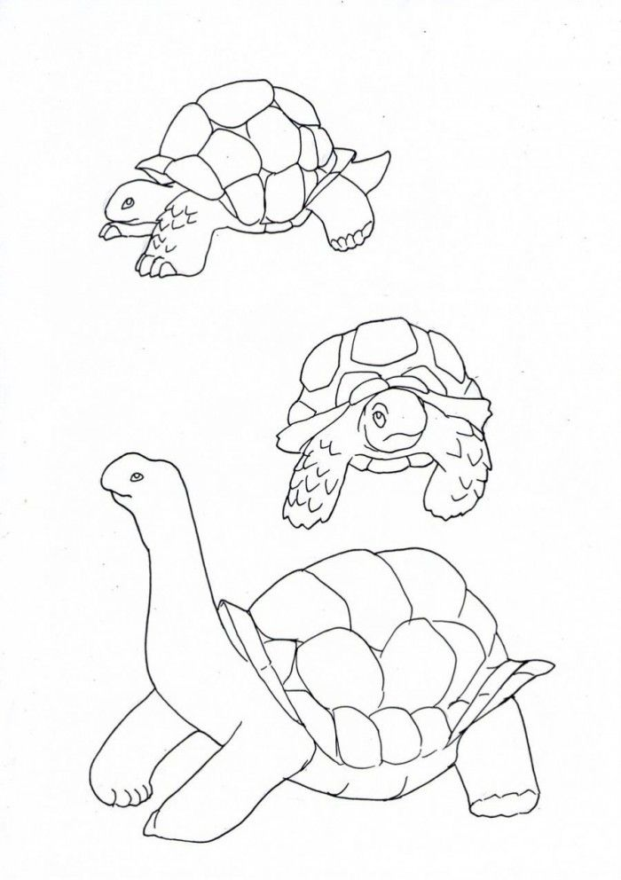 Yertle The Turtle Coloring Pages Coloring Home